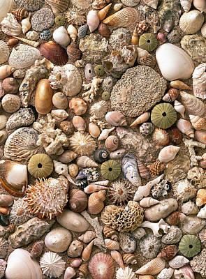 Sea Shells  Print by Mauro Celotti