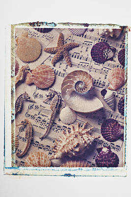 Sea Shells On Sheet Music Art Print