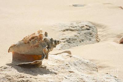 Grand Turk Island Photograph - Sea Shells On The Beach. by Gal Eitan