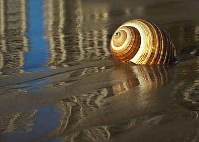 Sea Shells Art Print by Renee Doyle