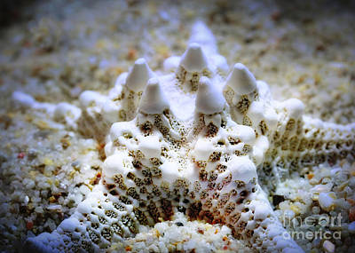 Sea Star Art Print by Judi Bagwell