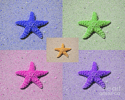 Purple Sea Stars Wall Art - Photograph - Sea Star Serigraph - 5 Stars by Al Powell Photography USA