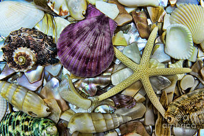 Purple Sea Stars Wall Art - Photograph - Sea Treasure - Landscape by Paul Ward