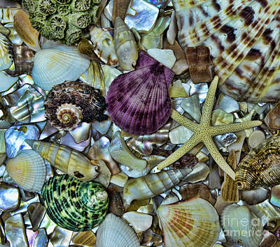 Purple Sea Stars Wall Art - Photograph - Sea Treasure - Square Format by Paul Ward