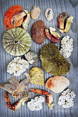 Crustacean Photograph - Sea Treasures by Elena Elisseeva