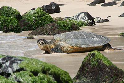 Sea Turtle 1 Art Print