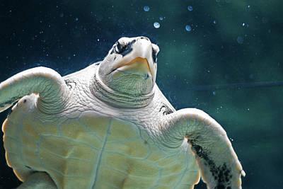 Rotterdam Photograph - Sea Turtle by Ellen van Bodegom