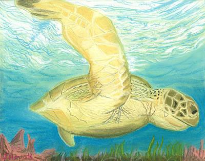 Reptiles Drawings - Sea Turtle  by Jackie Novak