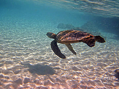 Hawaiian Green Sea Turtle Photograph - Sea Turtle Shadow On Sand by Bette Phelan