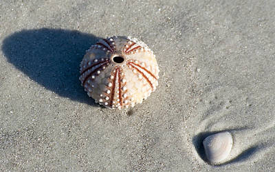 Sea Urchin And Shell Art Print by Kenneth Albin