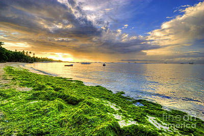 Photograph - Sea Weed Coast by Yhun Suarez