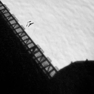 Scheveningen Pier Photograph - Seabird by Dave Bowman