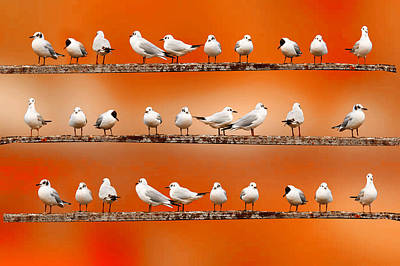 Y120831 Photograph - Seagul Surprise by Spangles44 flickr