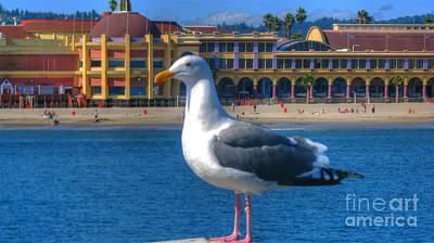 Photograph - Seagull And Santa Cruz Beach Boardwalk by Morgan Wright