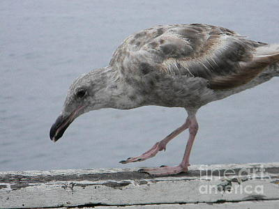 Seagull Photograph - Seagull by Anita V Bauer