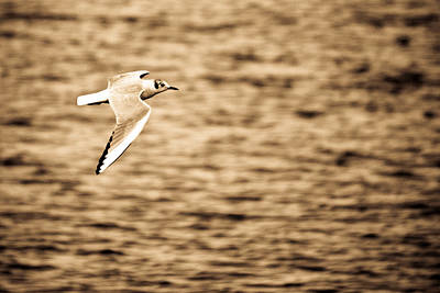 Seagull Antiqued Art Print by Michelle Joseph-Long