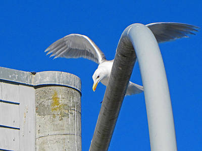 Photograph - Seagull Arches by Tikvah's Hope