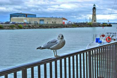 Art Print featuring the photograph Seagull At Lighthouse by Michael Frank Jr