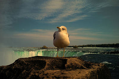 Photograph - Seagull At Niagara Falls by Lawrence Christopher