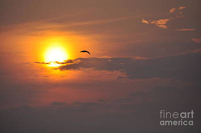 Seagull At Sunset Art Print by Fred Fishkin