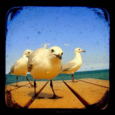 Seagull At The Beach - Ttv  Art Print by Tracy Milchick