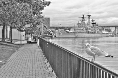 Art Print featuring the photograph Seagull At The Naval And Military Park by Michael Frank Jr