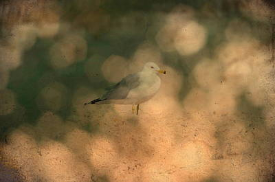 Photograph - Seagull Beach by Emily Stauring