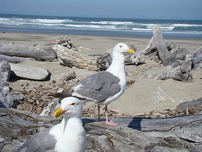 Seagull Bird Art Prints Coastal Beach Bandon Art Print by Baslee Troutman