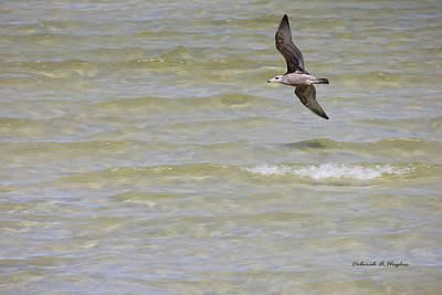 Photograph - Seagull by Deborah Hughes
