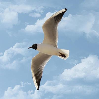 Seagull Flies Alone Under Blue Sky And Cloud Art Print by Margarete Nazarczuk
