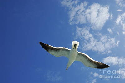 Seagull Flying In The Sky On Blue Sky Print by Sami Sarkis