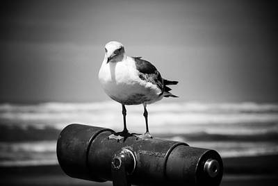 Digital Art - Seagull In Black And White by Fran Woods