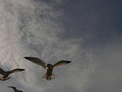 Photograph - Seagull In Flight by Randy J Heath