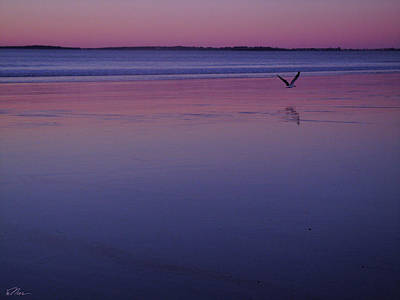 Photograph - Seagull In Solitude by Nancy Griswold
