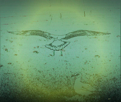 Seagull Landing Art Print by Judith Szantyr