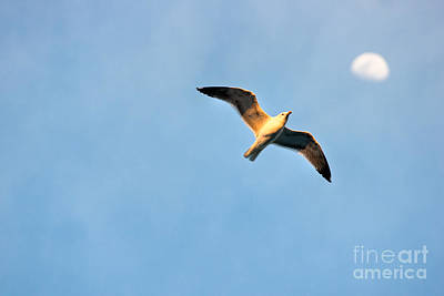 Art Print featuring the photograph Seagull by Luciano Mortula