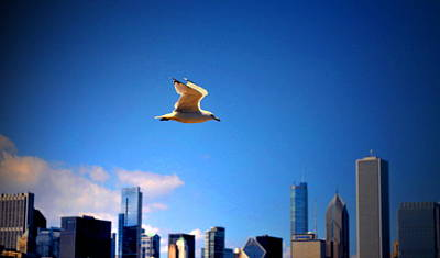 Photograph - Seagull Of The City by Emily Stauring