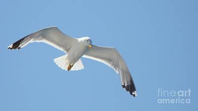 Seagull On The Sky Art Print by Olga R