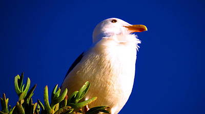 Photograph - Seagull On Top by Catherine Natalia  Roche