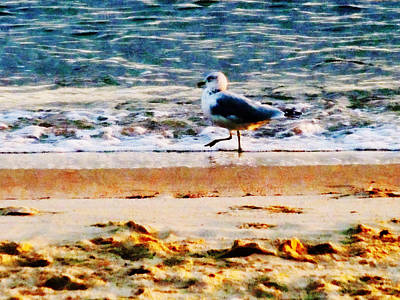 Photograph - Seagull On Virginia Beach At Dawn by Susan Savad