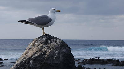Photograph - Seagull by Luis and Paula Lopez