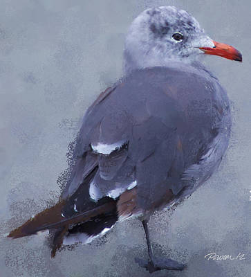 Seagull Portrait I Art Print by Jim Pavelle