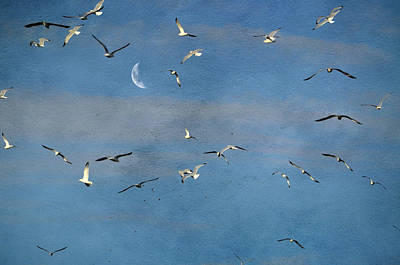Birds Photograph - Seagull Puzzle by Emily Stauring