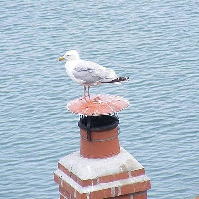 Finch Photograph - Seagull Resting On Chimney by Lois Papworth