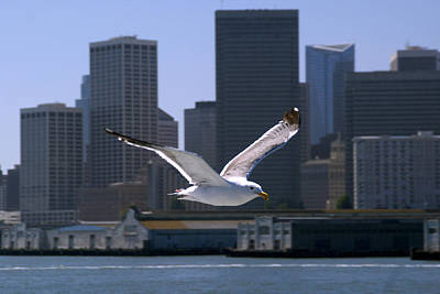 Photograph - Seagull by Rod Jones