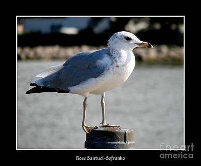 Bird Photograph - Seagull by Rose Santuci-Sofranko
