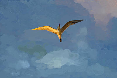 Seagull Sunrise Art Print by Miguel Pumarejo