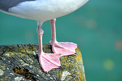 Part Of Photograph - Seagull by V Chettleburgh
