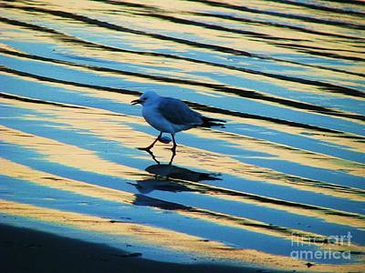 Photograph - Seagull Walking by Michele Penner