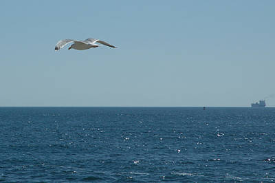 Photograph - Seagull With Freighter by Barry Doherty